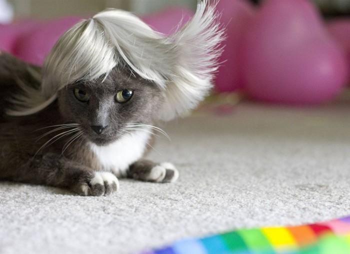 Вицове: Fashion коте