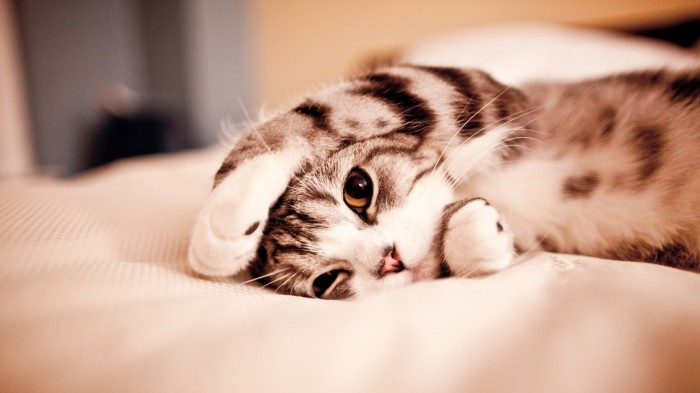 Вицове: Сладко коте