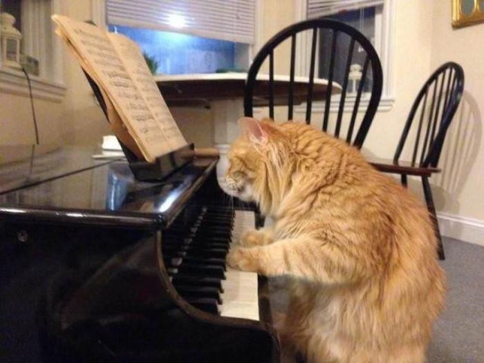 Вицове: Коте пианист