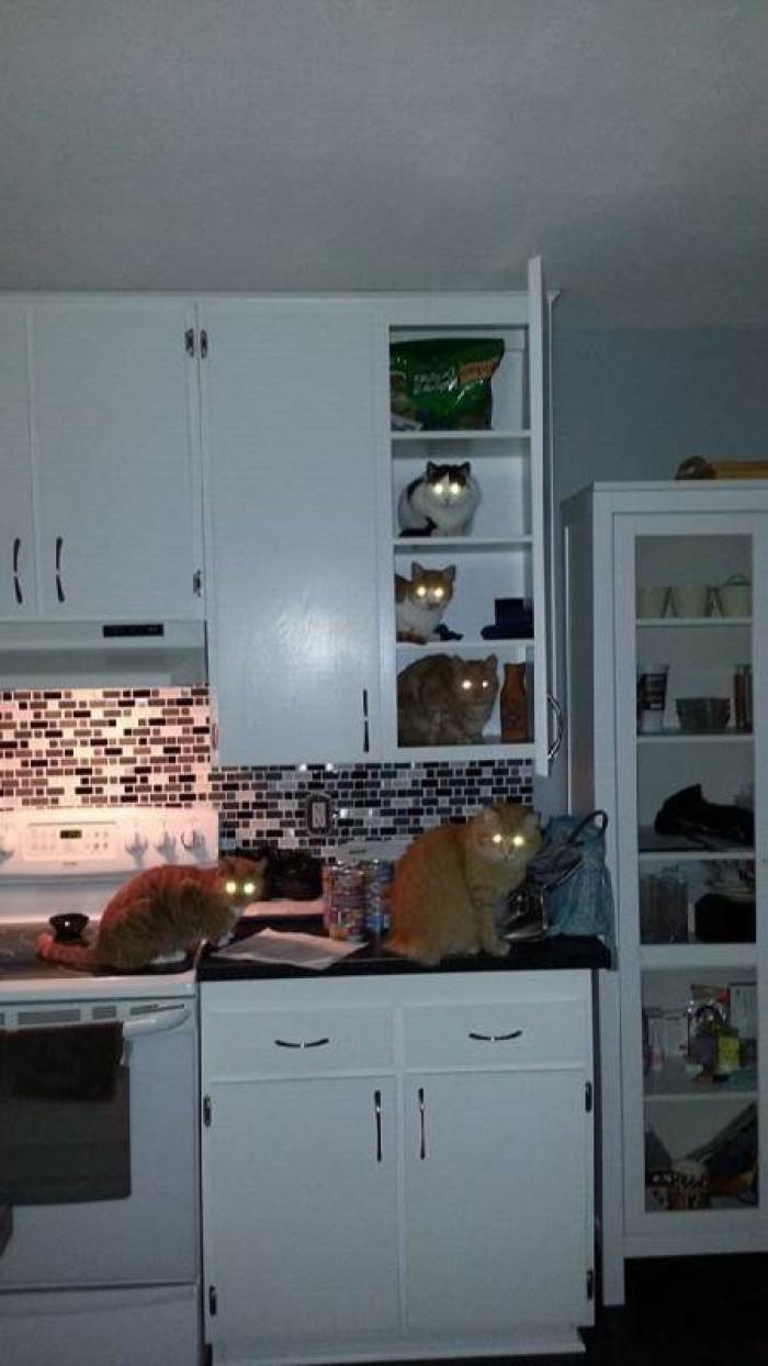 Вицове: Многоетажен дом за котки
