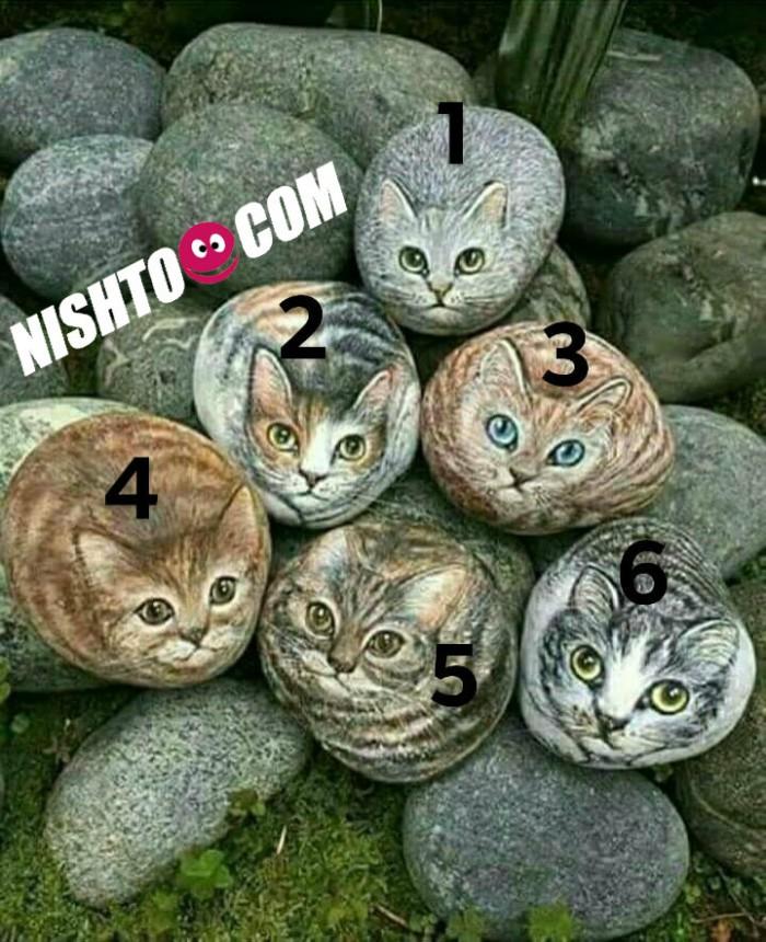 Вицове: Коя е истинската котка