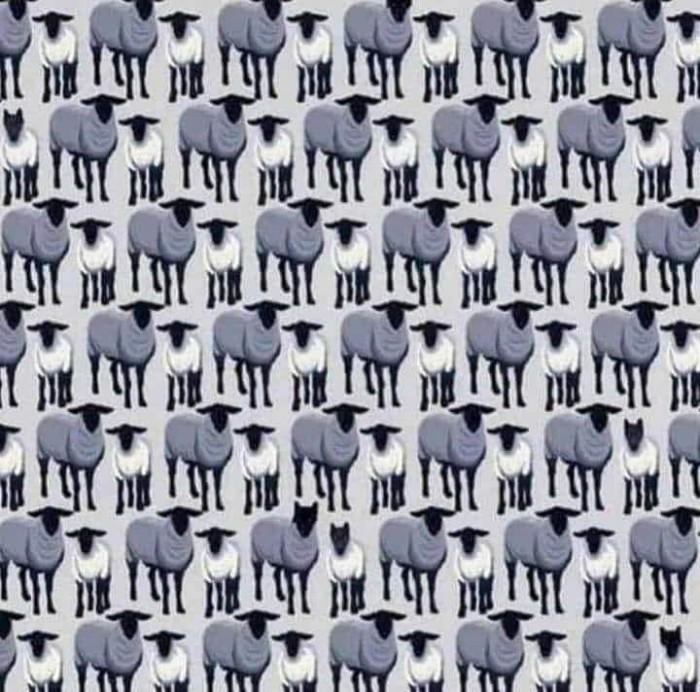 Вицове: Колко вълци има в стадото