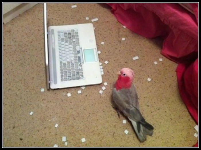 Вицове: Какво трябва да знаем преди да купим папагал?