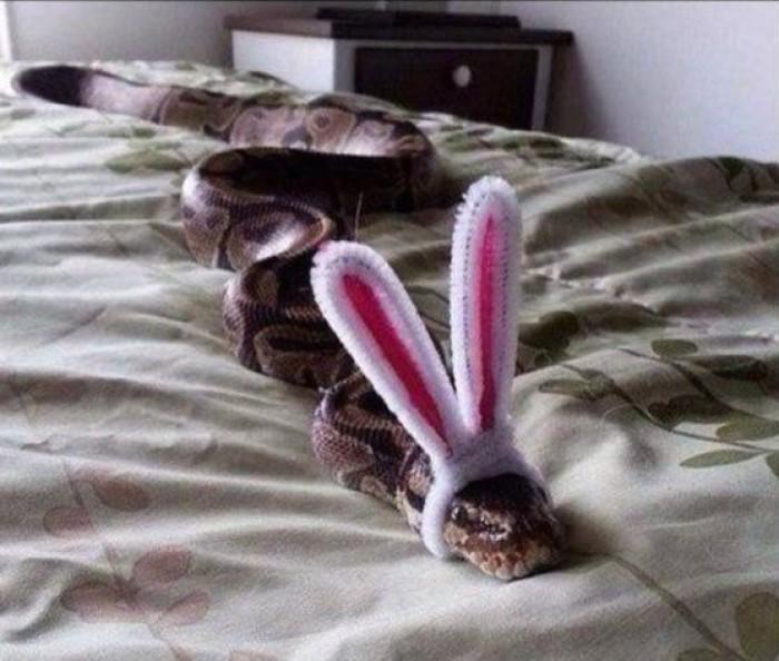 Вицове: Змей в леглото!!!