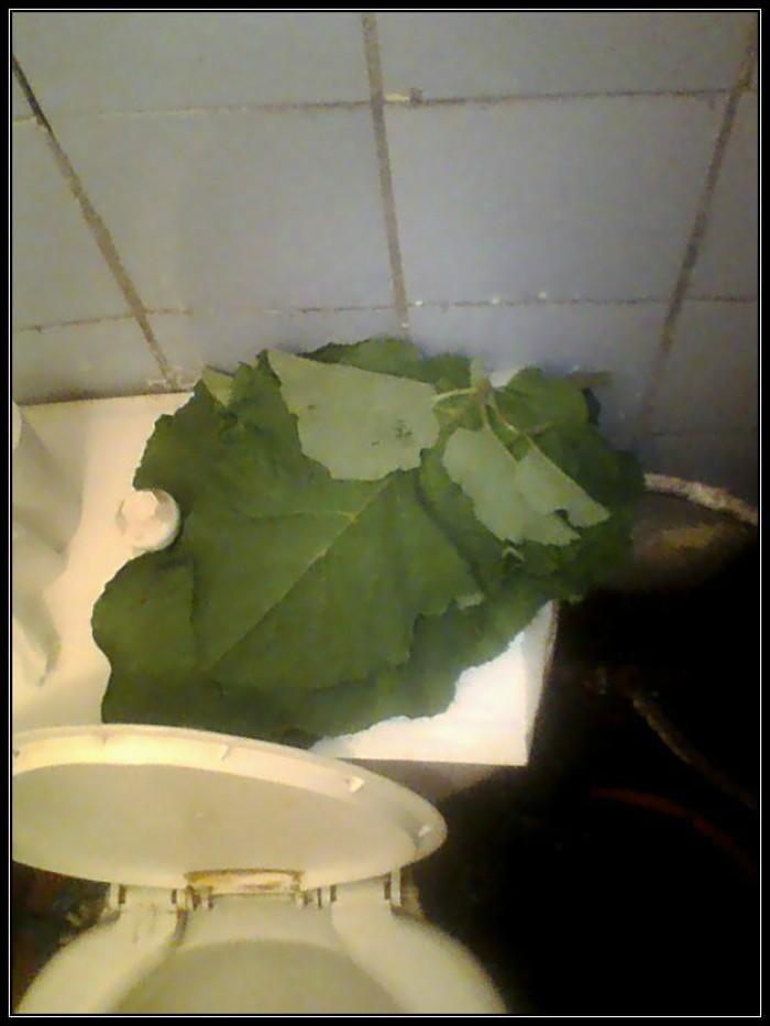 Вицове:  Заместител на тоалетна хартия!