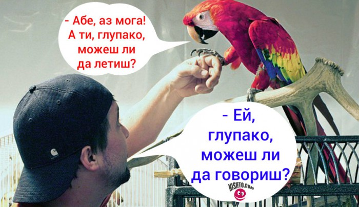 Вицове: Купих си папагал и го попитах