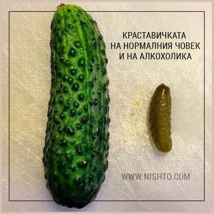 Вицове: Твоята краставичка каква е?
