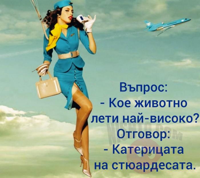 Вицове: Кое животно лети най-високо