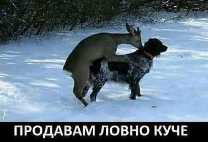 Вицове: Продавам ловно куче