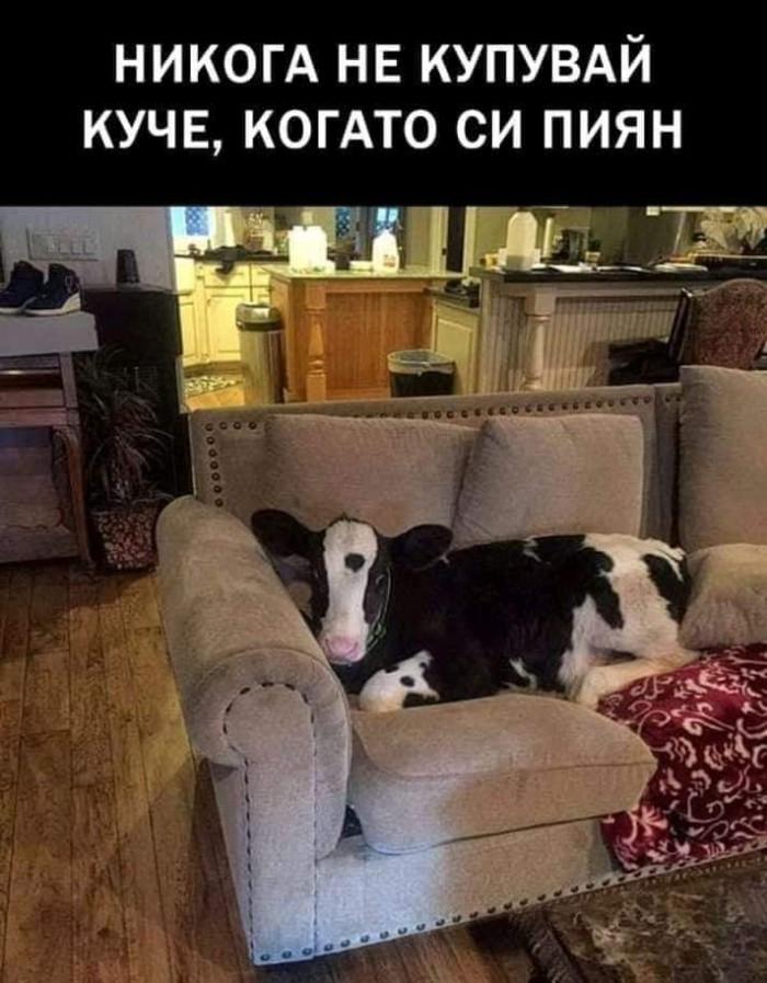 Вицове: Никога не купувай куче когато си пиян