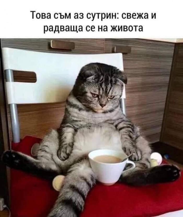 Вицове: Това съм аз сутрин