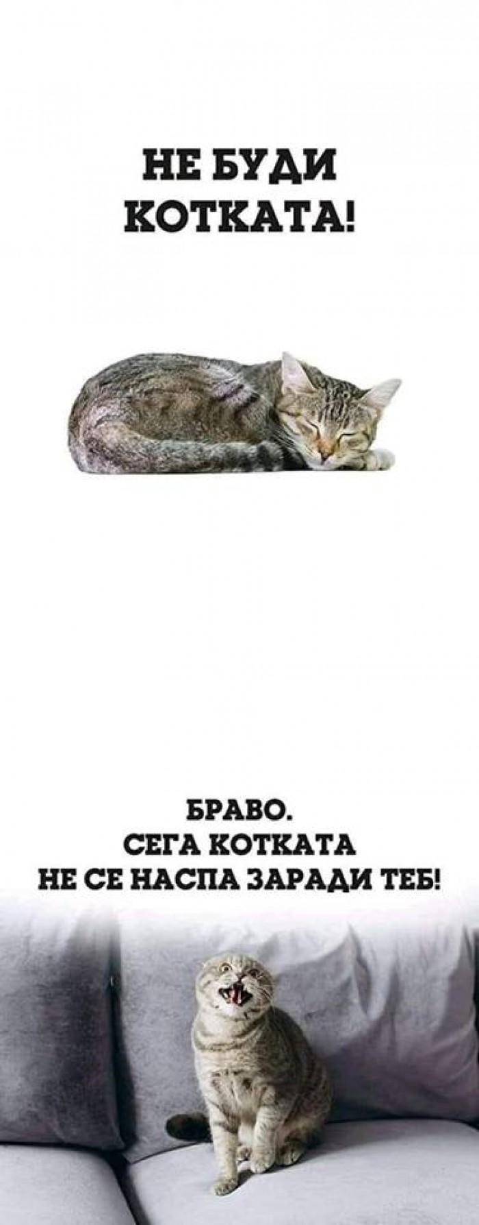 Вицове: Не буди котката