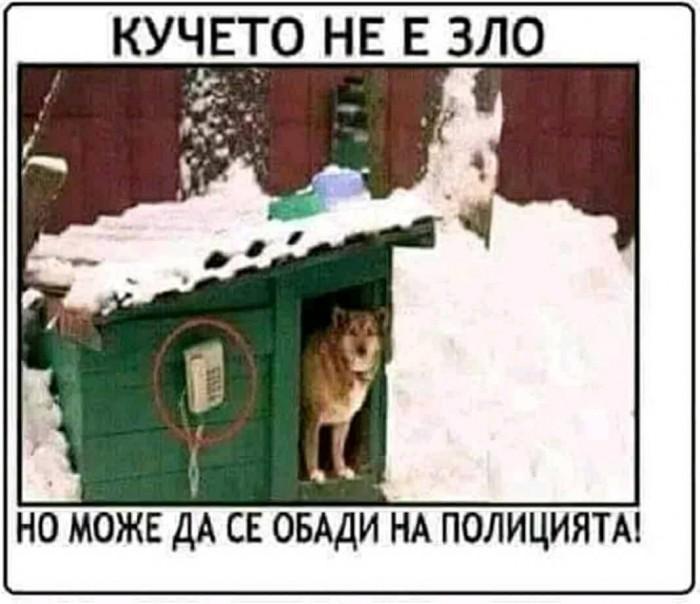 Вицове: Кучето не е зло
