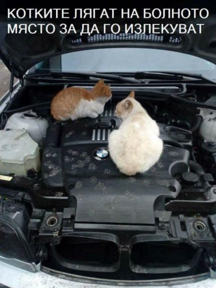 Вицове: Котките лягат на болното място