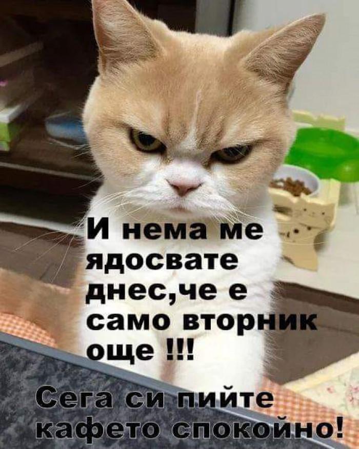 Вицове: Не ме ядосвайте