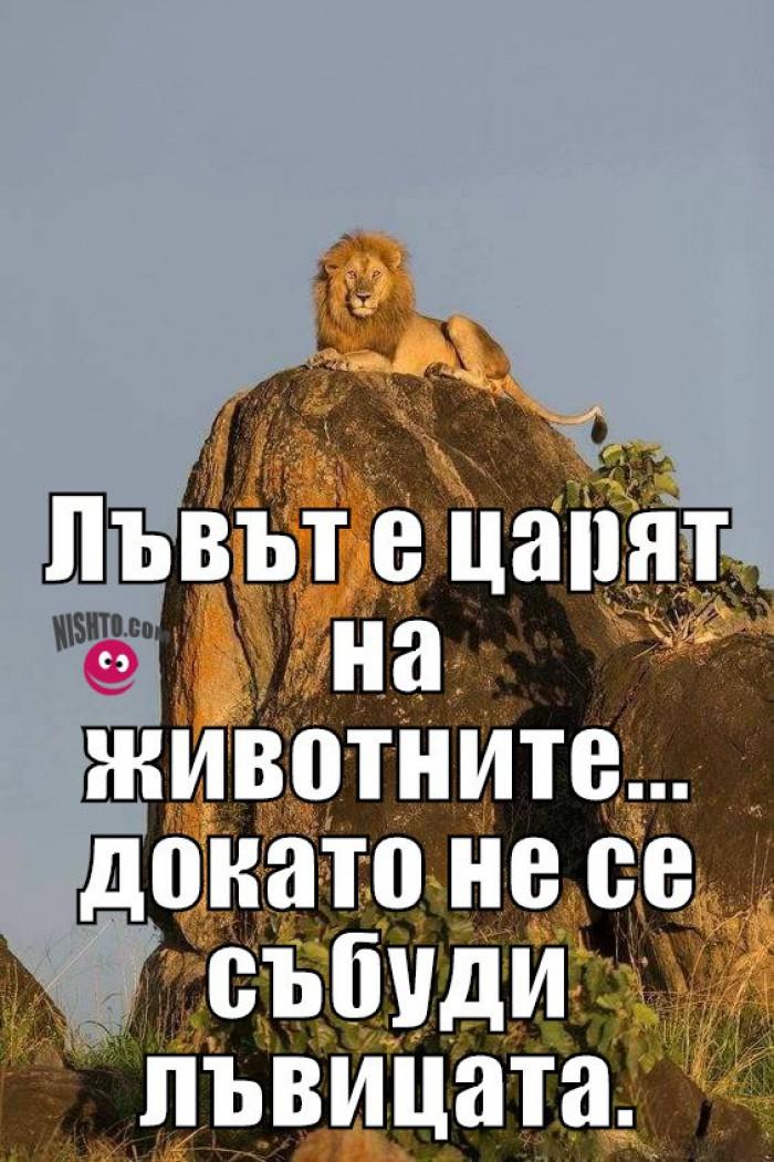 Вицове: Лъвът е царят на животните