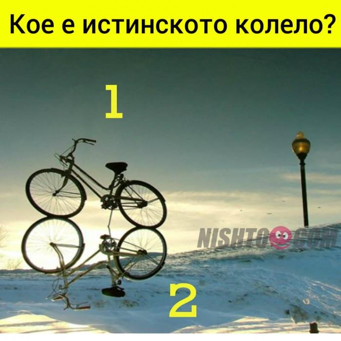 Вицове:  Кое е истинското колело?