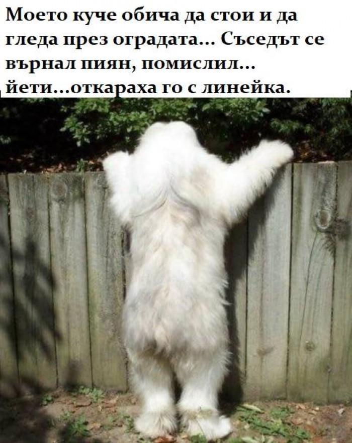 Вицове: Моето куче