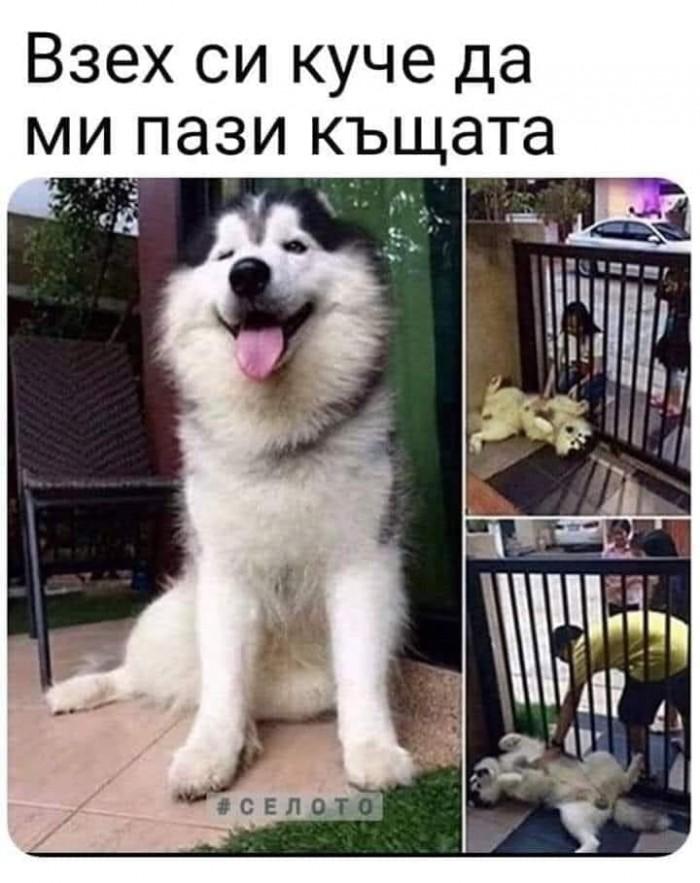 Вицове: Взех си куче