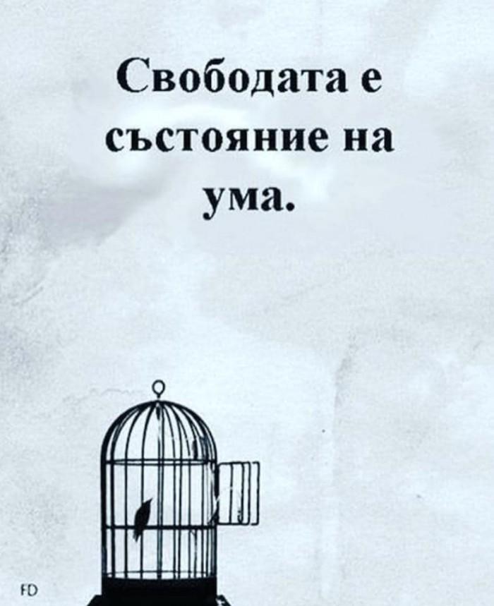 Вицове: Свободата
