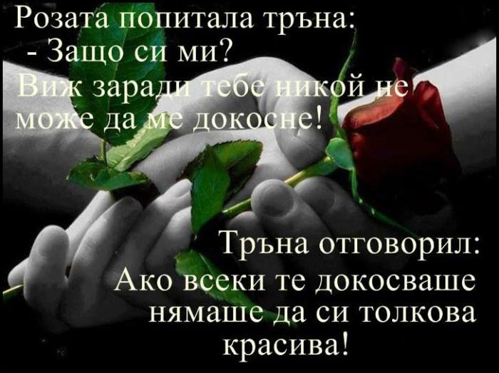 Вицове: Розата попитала тръна