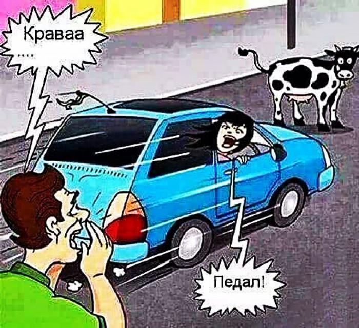 Вицове: Крава