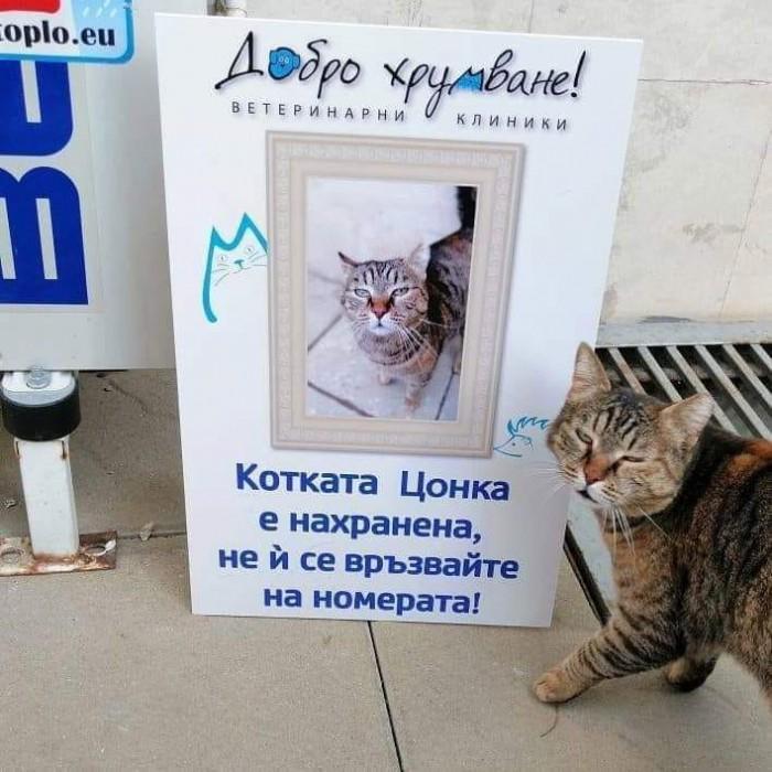 Вицове: Котката Цонка