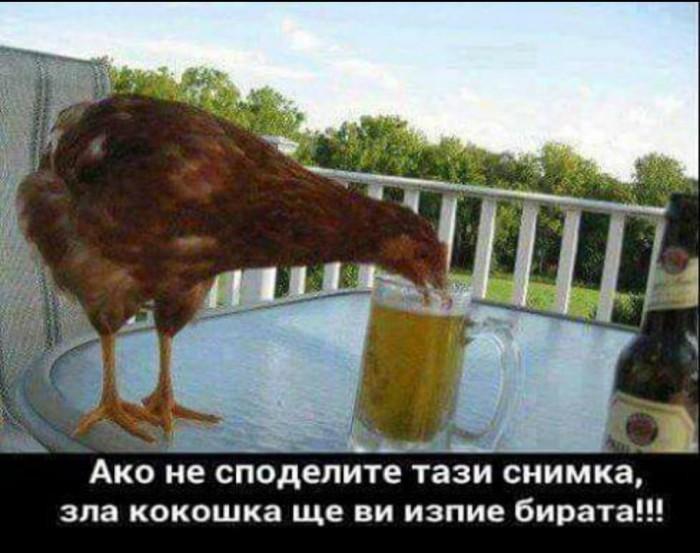 Вицове: Зла кокошка