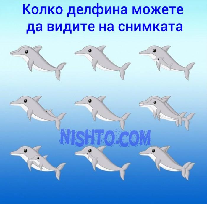 Вицове: Колко делфина можете да видите на снимката