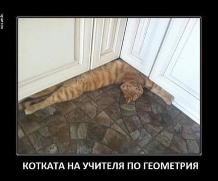 Вицове: Котката на учителя