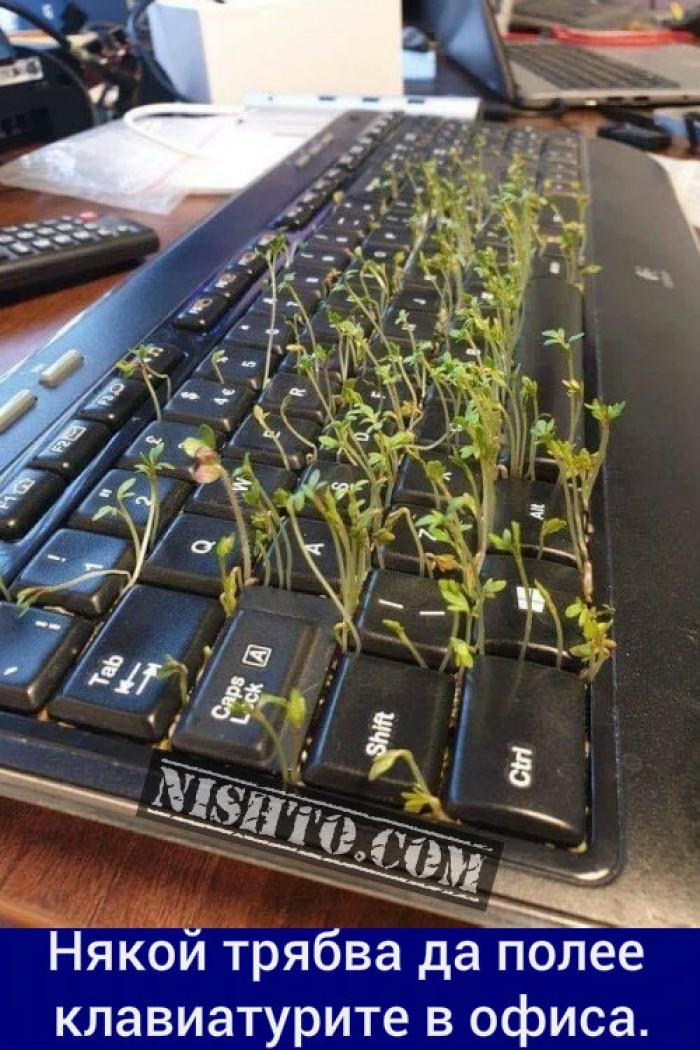 Вицове: Някой трябва да полее клавиатурите в офиса