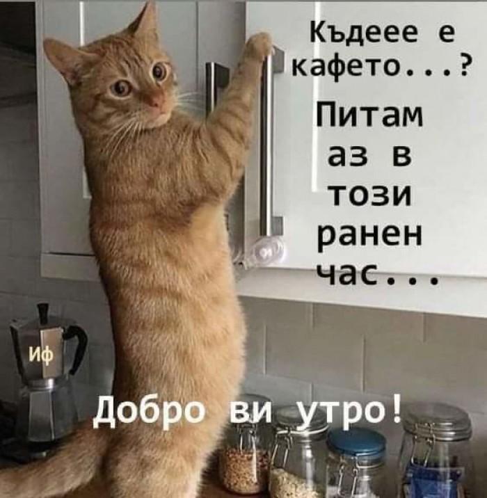 Вицове: Къде е кафето