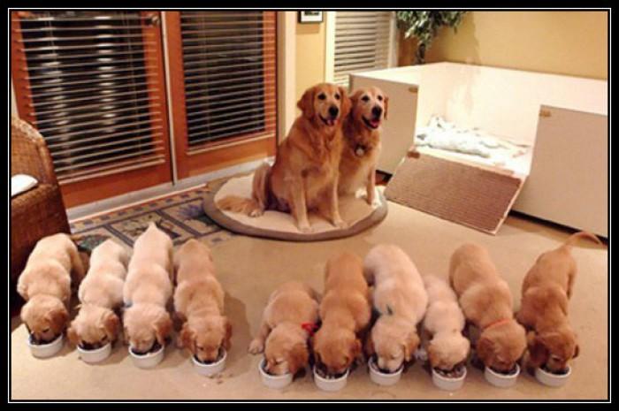 Вицове: Щастливо семейство