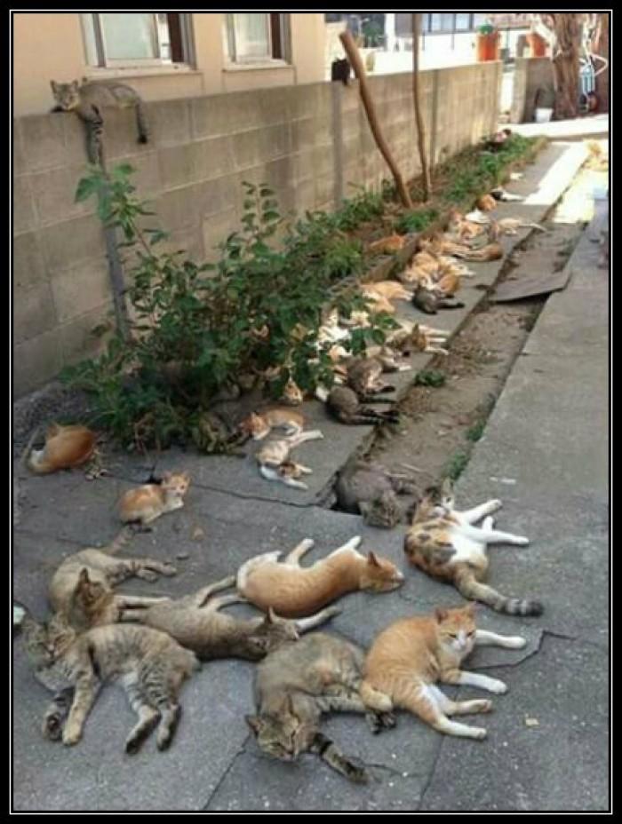 Вицове: Котки в обедния сън