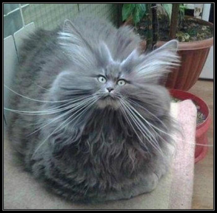 Вицове: Маркова котка