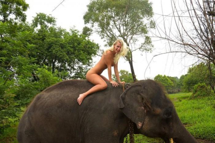 Вицове: Де да бях слон