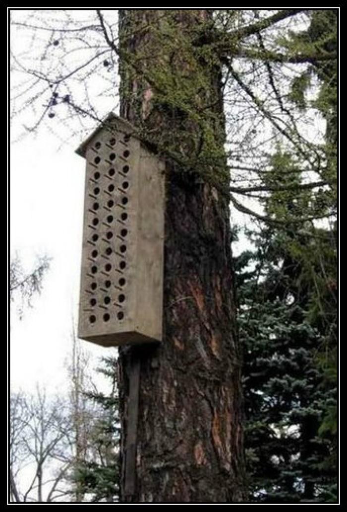 Вицове: Приют за птички