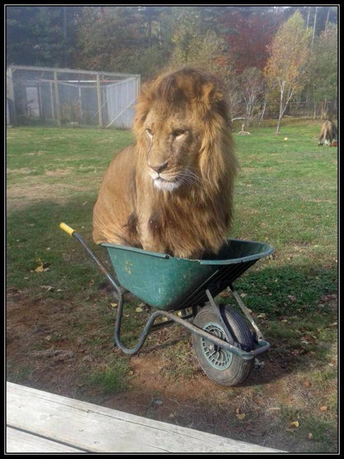 Вицове: Мързеливия цар