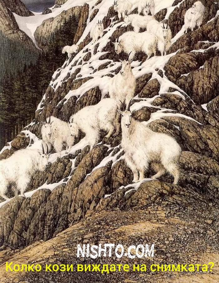 Вицове: Колко кози виждате на снимката?