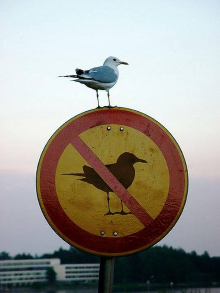 Вицове: Забранено